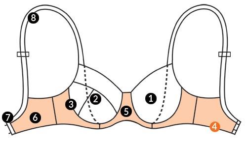 آناتومی سینه بند 6