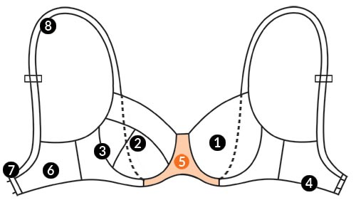 آناتومی سینه بند 7