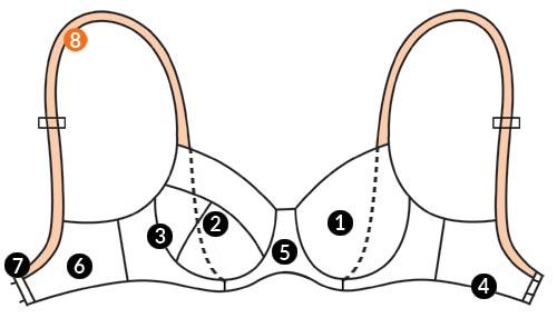 آناتومی سینه بند 10